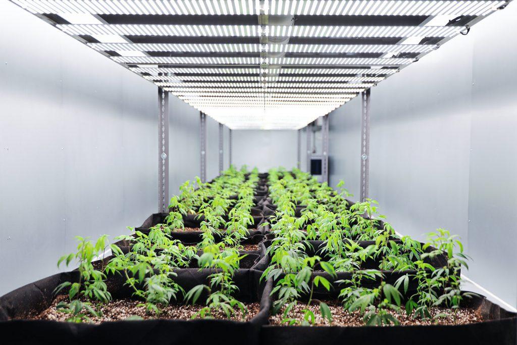 Marijuana Growing Containers through Greenhouse