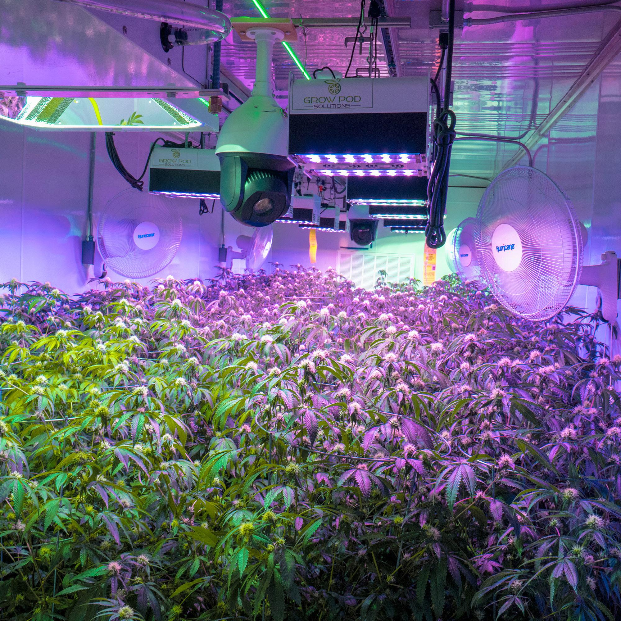 Building Marijuana Grow Room in Containers