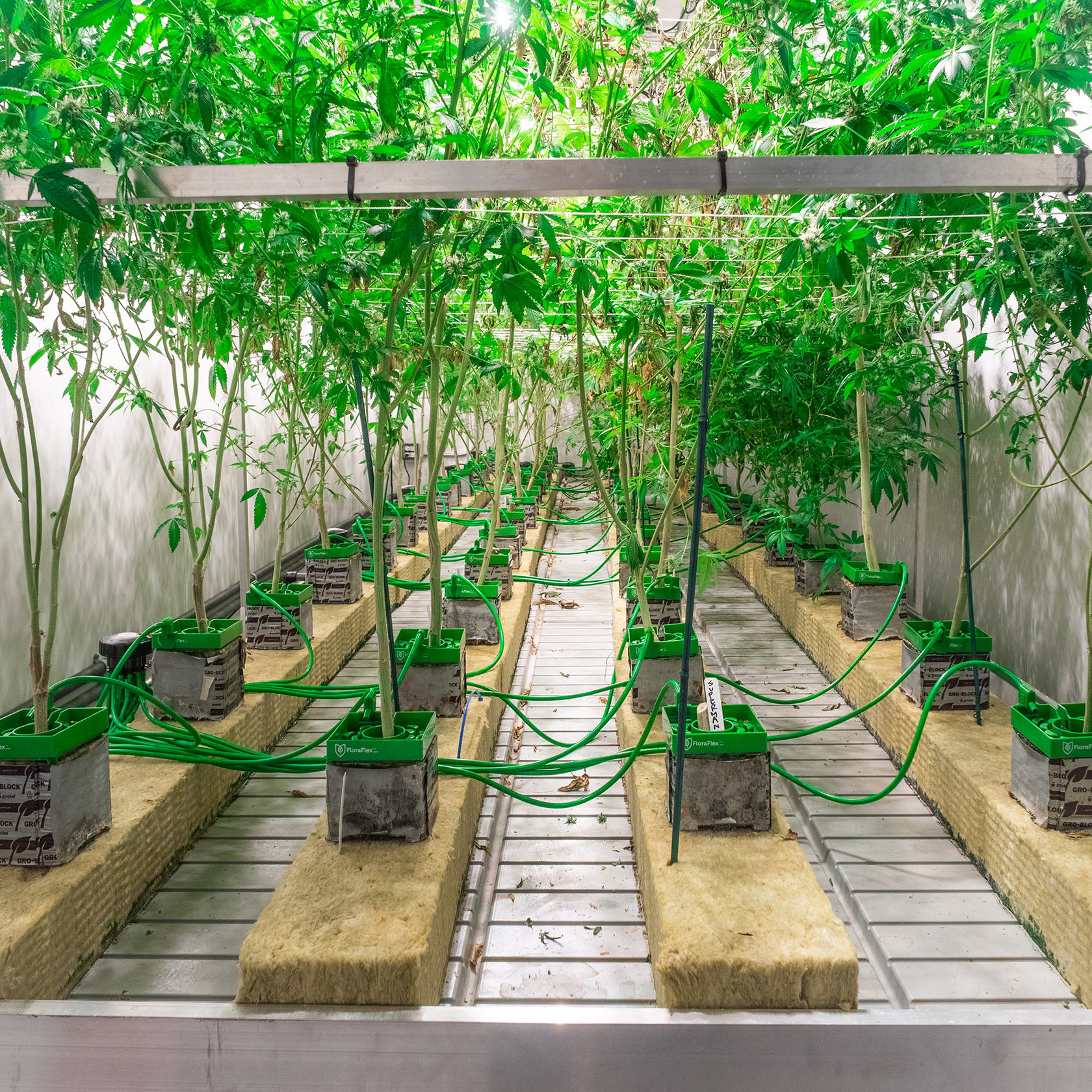 Cannabis Production in Shipping Container Farms