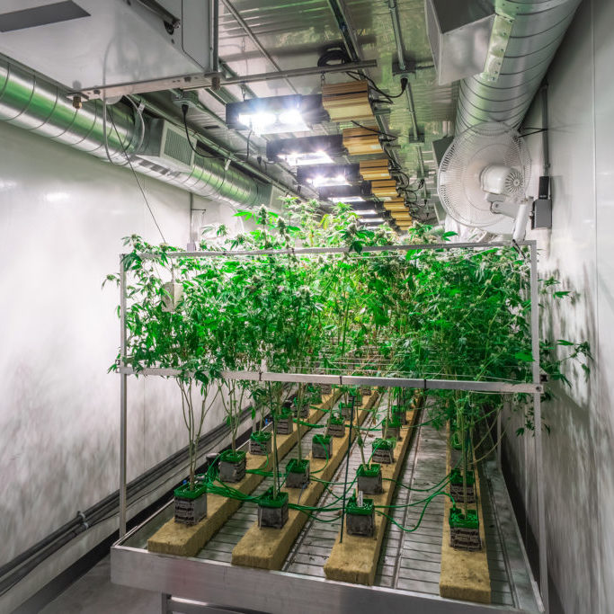 Commercial Marijuana Shipping Container Farming