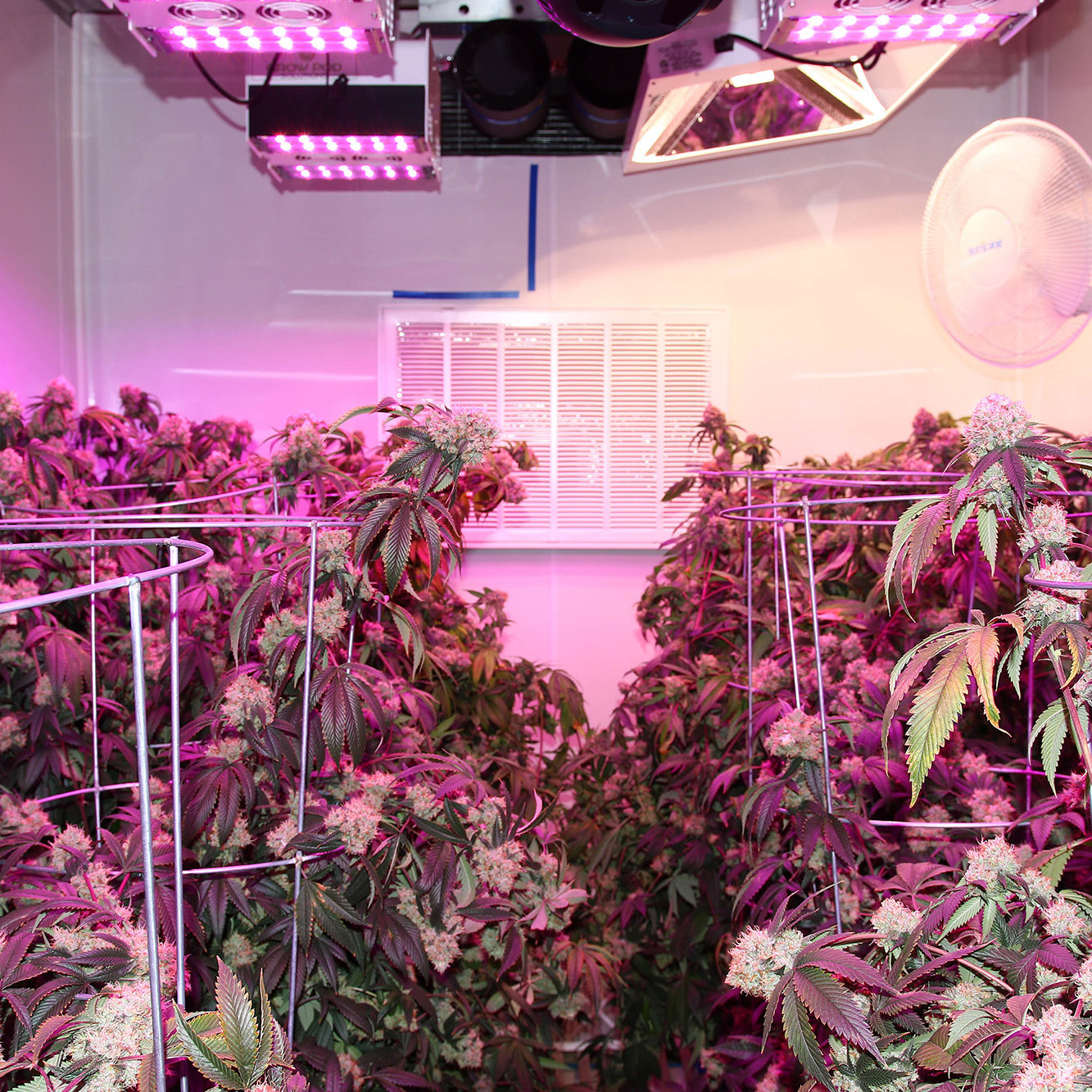 Future of Marijuana Grow Rooms in Containers