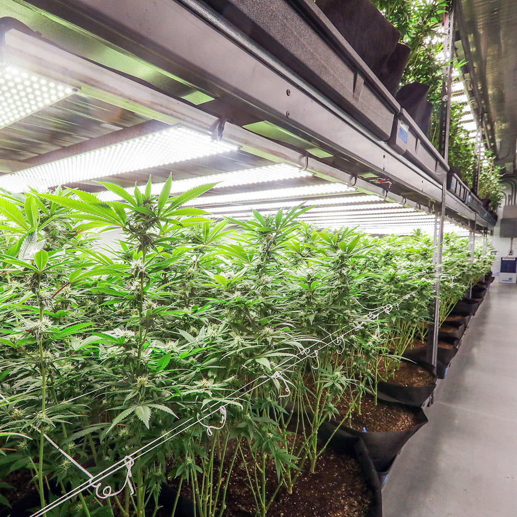 Guide on Starting your Marijuana Growing Rooms